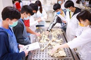 醫學解剖初體驗 義守大學跨域共學扎根高中-物理治療學系